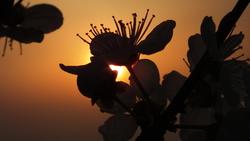 album / Wiosenne włóczęgi z aparatem... – zdjęcia zebrane 01.04 – 11.04.2014http://nikiel.jalbum.net/spacery.01-11.04.2014/