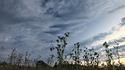 Spacery - łąki i pola o zachodze słońca - 12.08.2013