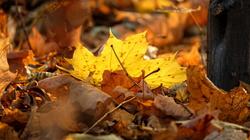galeria / w złoto i czerwień zdobna jesień – wybrane zdjęcia z 05.11.2015